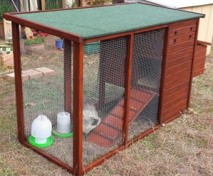 small backyard chicken coop